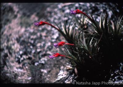 2001-07-26_JAPP_12907